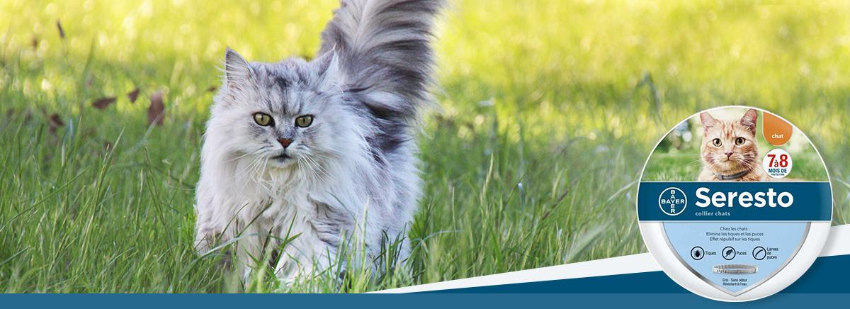 collier seresto anti-parasitaires pour chat chez Zoomalia