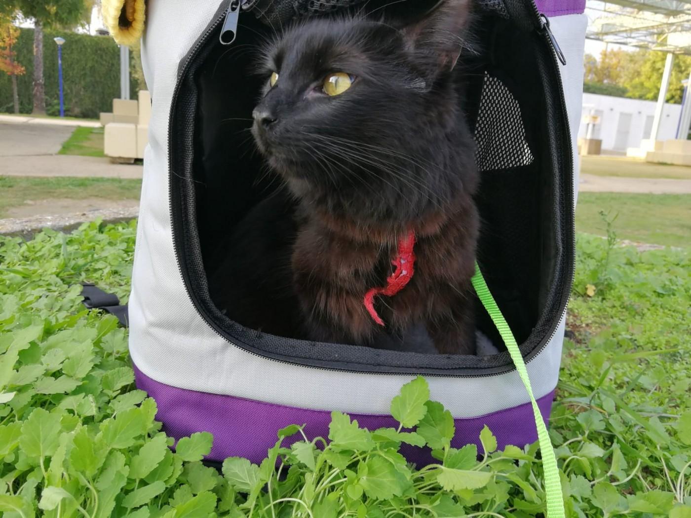 Serré poilu chatte noire