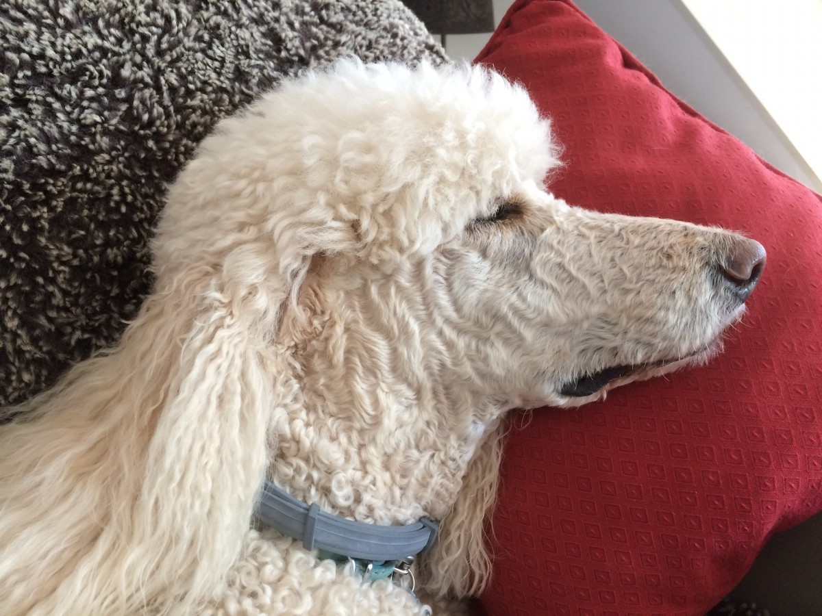 Seresto Flea Tick Dog Collar In The Uk