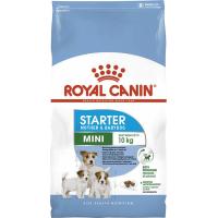 Royal Canin Mini Starter Mother & Baby - Chiot et chienne en gestation - lactation (jusqu'à 2 mois)