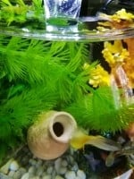 1751_Chauffage-nano-aquarium-NeWattino-Plus-10W_de__15413807275a8bf462408488.82976470