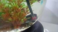 Chauffage-nano-aquarium-NeWattino-Plus-10W_de_Karina_193830575056fe615edcb858.32215002