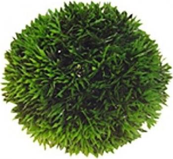 Plante artificielle en forme de boule plantes artificielles pour aquariums - Boule en verre pour plante ...
