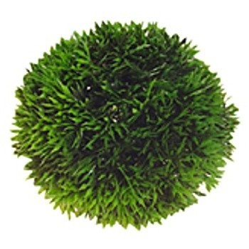 Plante artificielle en forme de boule plantes for Plante boule artificielle