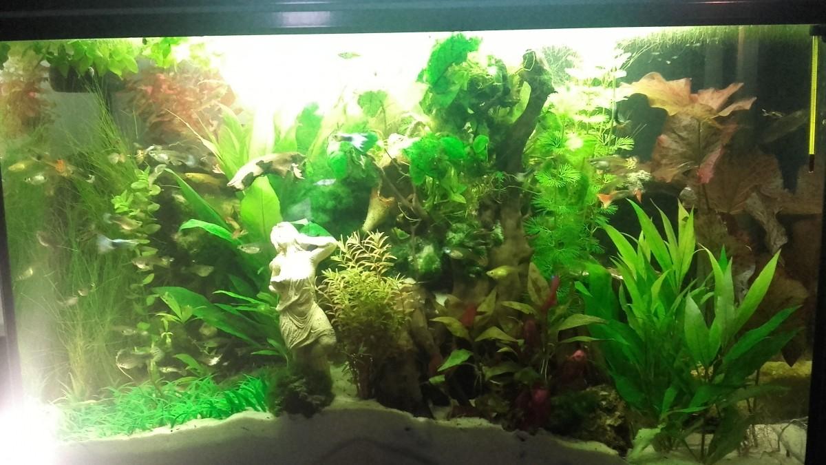 plant mat 3 plante artificielle pour aquarium plantes. Black Bedroom Furniture Sets. Home Design Ideas