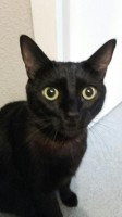18026_ORIJEN-Cat-&-Kitten-Sans-Céréales-pour-chat-et-chaton_de_LAURENCE_5377203165b295a5b594e56.57040024