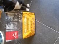 ORIJEN-Cat-&-Kitten-Sans-Cereales-pour-chat-et-chaton_de_GAEL_13236384475d414fd1e4a3c9.60168467
