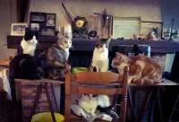 ORIJEN-Cat-&-Kitten-Sans-Cereales-pour-chat-et-chaton_de_Gwendoline_7100223005b05cda6adbb33.99859328