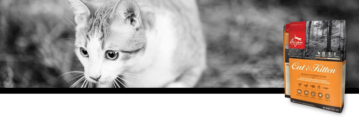 cat and kitten orijen