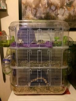 Hamster Rodylounge Cage Pour Kiwi Sur Trio Couleur Avis wPkXn0O8