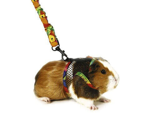 Small Pet Harness_0