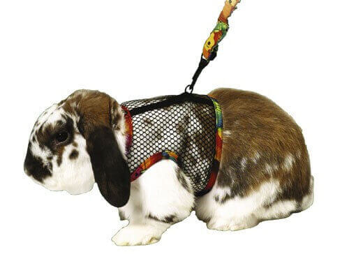 Small Pet Harness_1