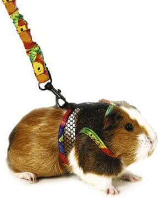 Small Pet Harness