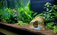 1863_JBL-Manado-Substrat-naturel-pour-aquarium_de_Jean-Philippe_44743859259d33272de8b03.09038952