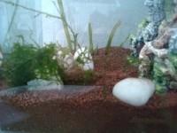 1863_JBL-Manado-Substrat-naturel-pour-aquarium_de_Laure_62602793659a7bf20266165.99562420