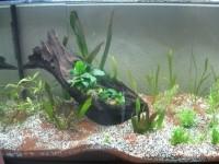 1863_JBL-Manado-Substrat-naturel-pour-aquarium_de_Martine_11587781795ae436ef490b40.20527144