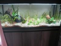 1863_JBL-Manado-Substrat-naturel-pour-aquarium_de_Martine_1320430945ae436c544e355.28631705
