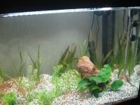 1863_JBL-Manado-Substrat-naturel-pour-aquarium_de_Martine_2686406105ae4371de94e21.00210332
