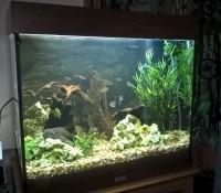 1863_JBL-Manado-Substrat-naturel-pour-aquarium_de_frederic_4483217705a9e3c98be7274.12669437
