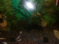 1863_Substrat-naturel-pour-aquarium---Manado_de_Christophe_16031620957fdc44ca44f18.81901746