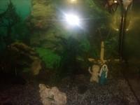 1863_Substrat-naturel-pour-aquarium---Manado_de_Christophe_60327943257fdc482741f59.28503840