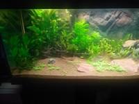 1863_Substrat-naturel-pour-aquarium---Manado_de_Thomas_163713106558d4cb6711ee98.56260063