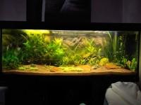 1863_Substrat-naturel-pour-aquarium---Manado_de_Thomas_199070652758d4cb17081b81.48902750