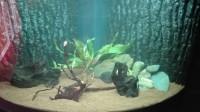 Substrat-naturel-pour-aquarium---Manado_de_Anthony_65838808357fe4eab70fa84.69835105