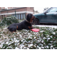KONG-chien-Classic-Flyer-2-tailles---frisbee-souple-et-resistant_de_m therese_1747961516026c052591d71.06175808