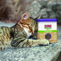 KONG Naturals Herbe à chat - parfum attractif - 56g
