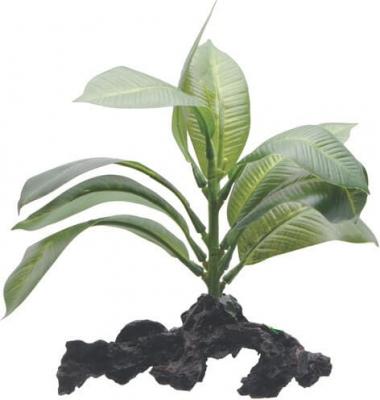 FLUVAL planta de Anubia 15 cm