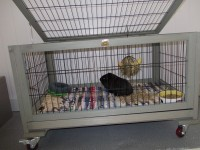 Cage-INLAND-lapin-toy---cochon-d'inde---furet_de_cATHERINE_70993440852f37c80b0a837.31715579