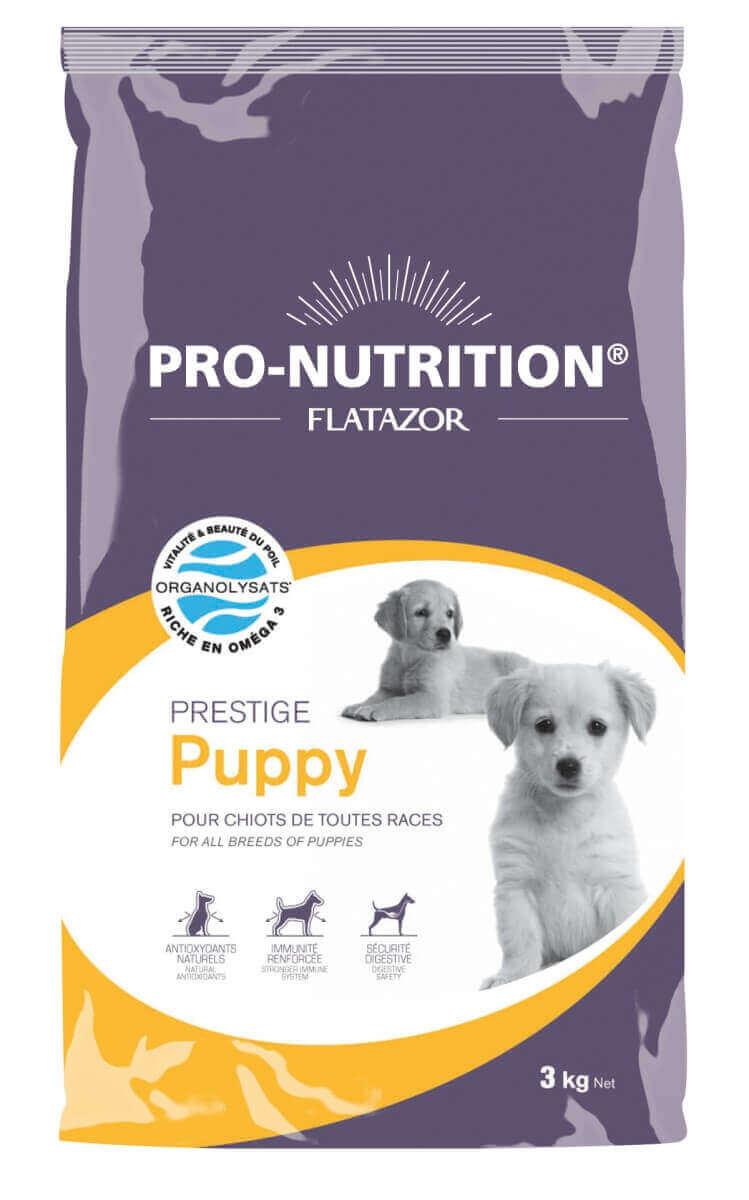 Flatazor Prestige Puppy_0