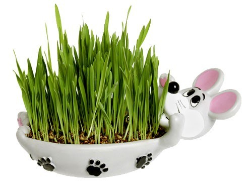 karlie - herbe à chat avec bol a faire pousser - herbe à chat