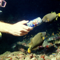JBL MariPearls Perles alimentaires pour animaux marins