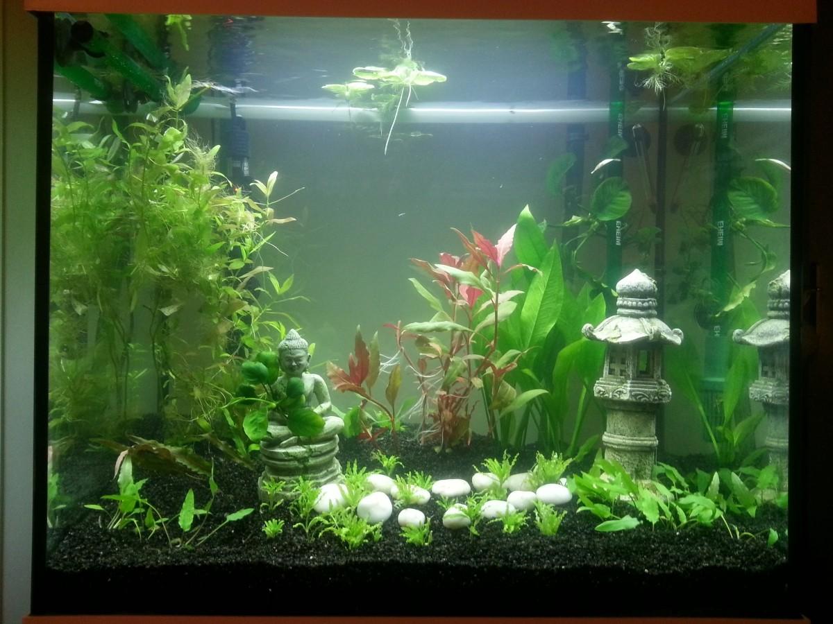 Deponitmix professional 9in1 substrat de fond pour for Produit pour aquarium