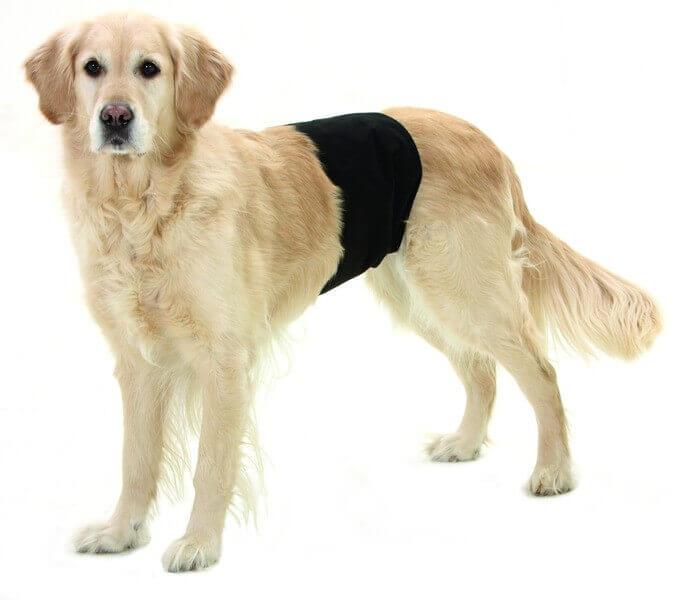 gentleman wraps plus pantalon de protection pour chiens couche pour chien. Black Bedroom Furniture Sets. Home Design Ideas