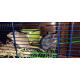 Cage-Habitat-pour-hamster-et-gerbille_de_Solene_614134406068b25d164ca1.38449458