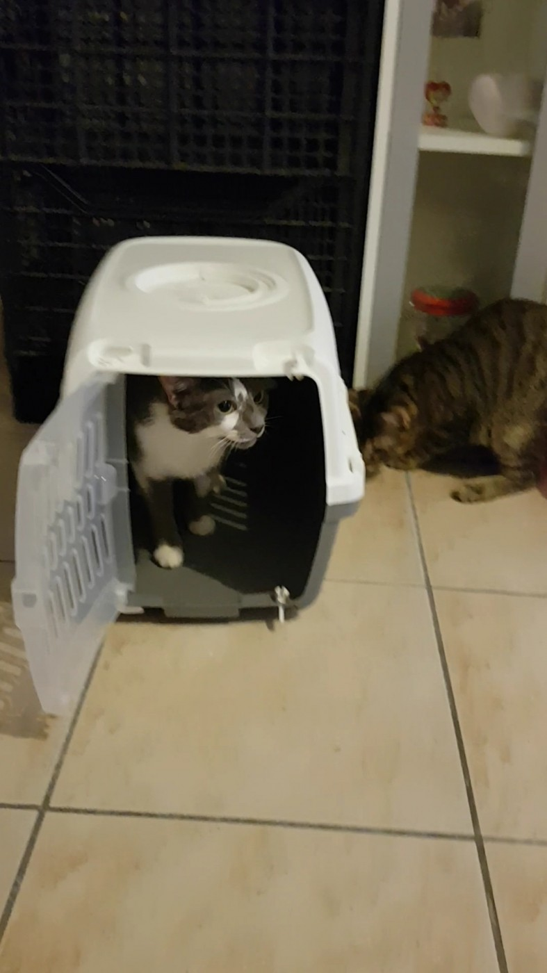 caisse de transport zephos pour chat et petit chien. Black Bedroom Furniture Sets. Home Design Ideas