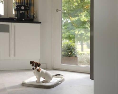 Puppy Trainer Starter Kit