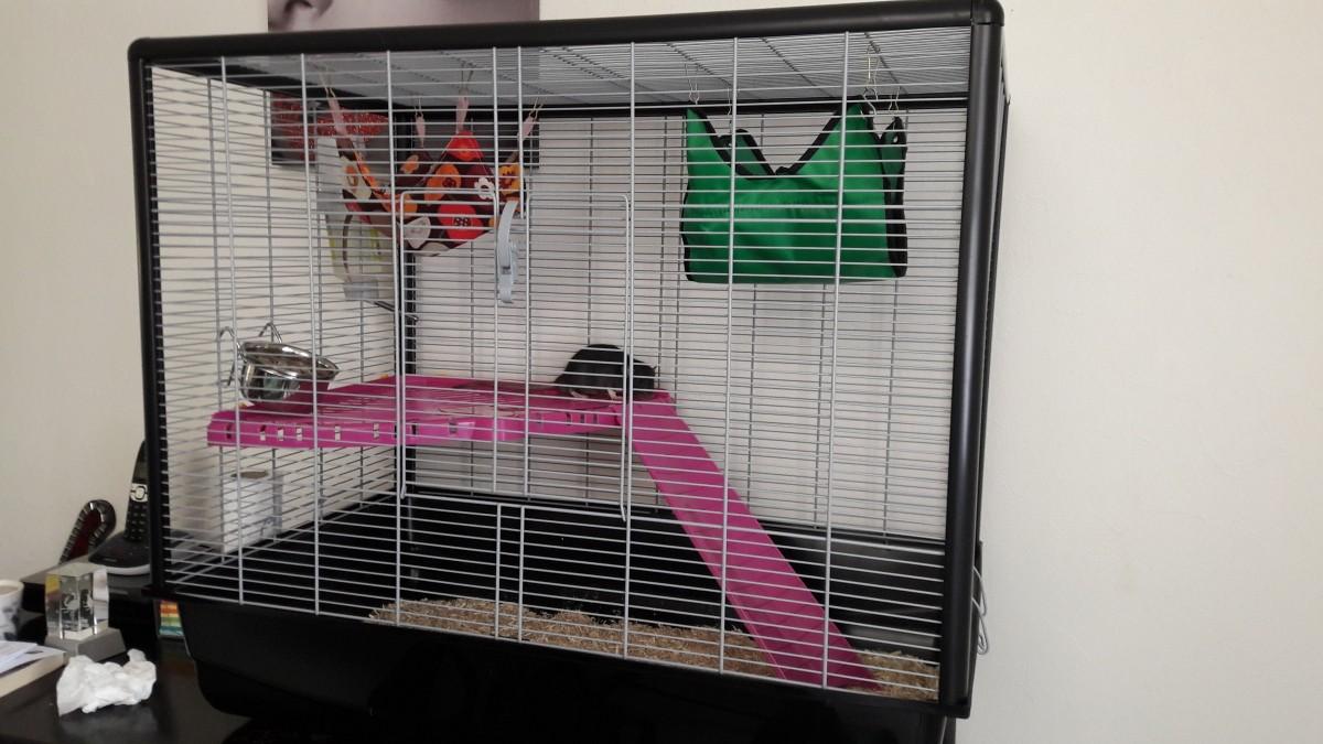 20402 Cage Pour Rat Et Furet ZENO Knock