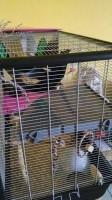 20402_Cage-pour-Rat-et-Furet--ZENO--Knock-Down_de_Marina_1303642991578f5c0d093612.45047813