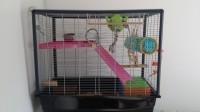 Cage-pour-Rat-Zeno-80-a-100-cm_de_aurore_11277754175577e70be936c9.35814413