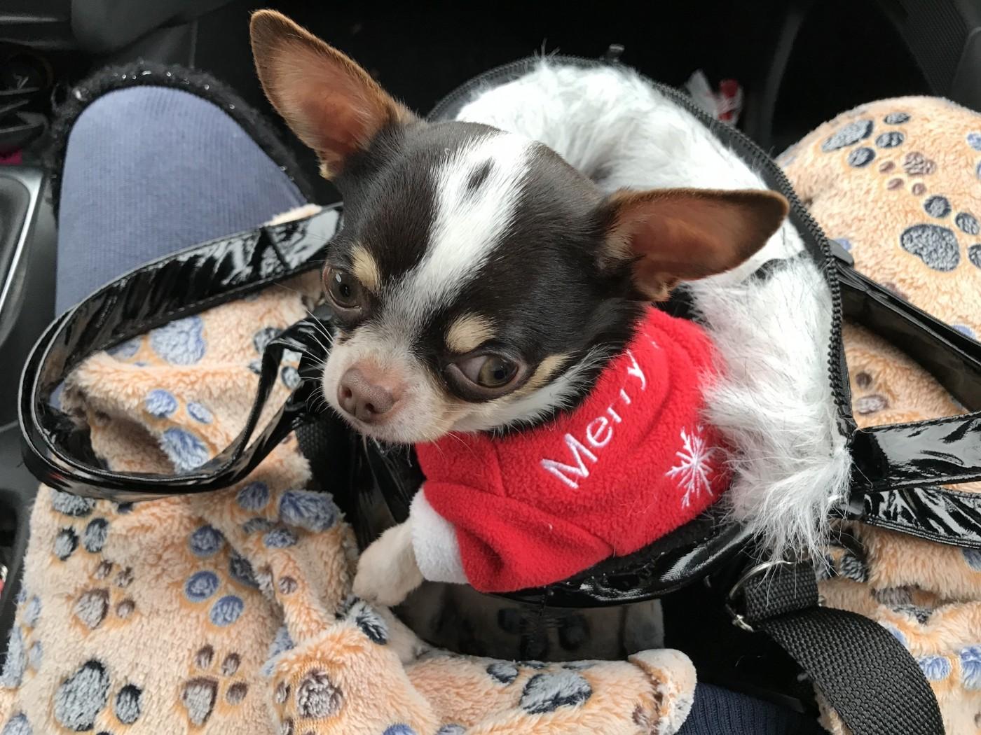 livraison gratuite large choix de couleurs et de dessins mode de premier ordre Sac de transport pour chien - LOLA