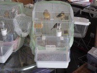 20552_Cage-pliable-pour-oiseau---DOLAK_de_MARYLENE_42829491954fbecc129fdb9.83387063