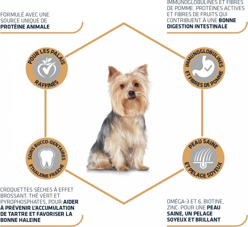 Advance Yorkshire Terrier Adult