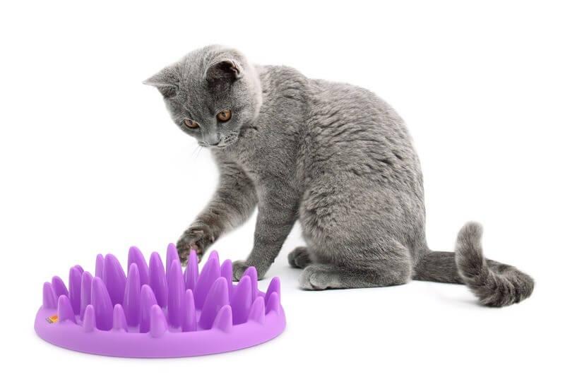 jouet chat nourriture