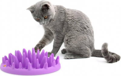 Dispensador interactivo de comida para gatos - NORTHMATE CATCH