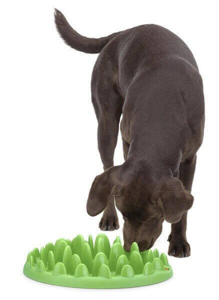 dispensador comida perro: