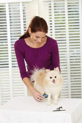 Mini tondeuse sans fil pour petit chien